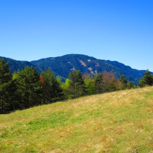 Man findet saftige Wiesen im Naturpark Trudner Horn (c) Karmen Nahberger