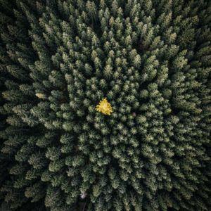 Nationalpark Gesäuse © Stefan Leitner