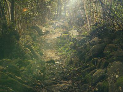 Waldweg, Pixabay