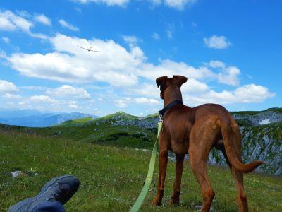 Wandern mit Hund, Pixabay